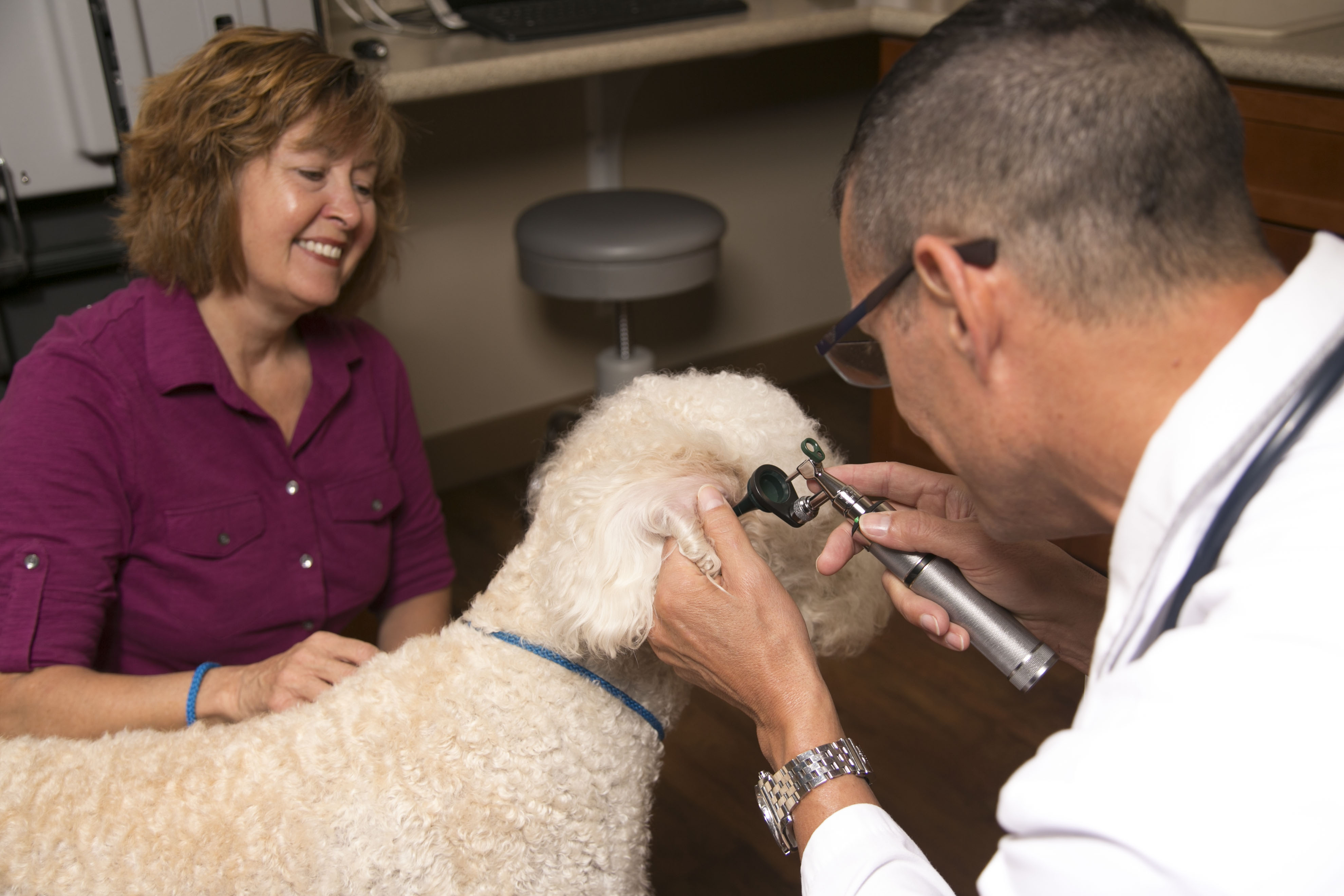 Hannah the Pet Society offers Wellness and Preventive Care Veterinarian Services